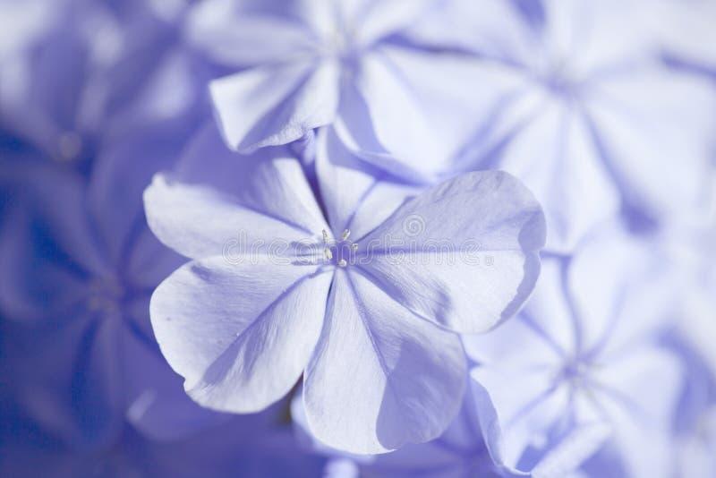 石墨自然宏指令花卉背景 库存图片