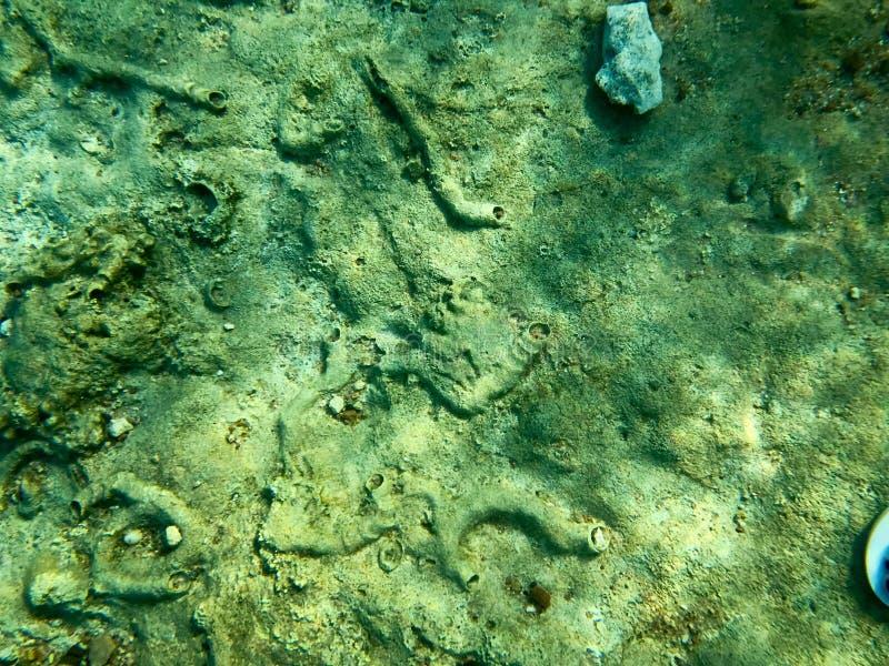 石头、地球、海底与珊瑚礁和海藻纹理在蓝色绿色水,海,海洋的水下的看法下a的 库存图片