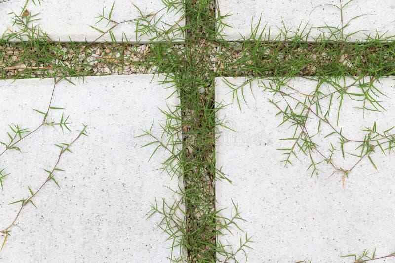 石头和石渣走道路面在庭院里 免版税库存图片