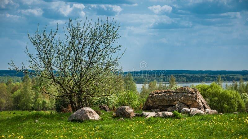 石头块和一棵年轻树在清洁与草和蒲公英在湖附近 库存照片