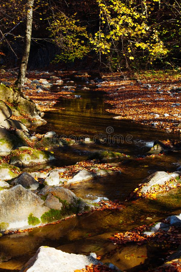石头瀑布反射森林水秋天树太阳风景黄色公园离开 免版税库存图片