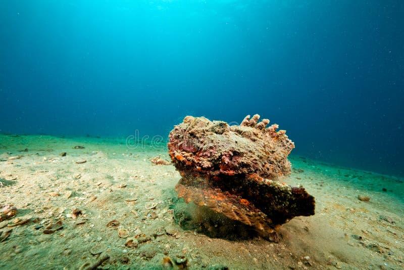 石头鱼 库存图片