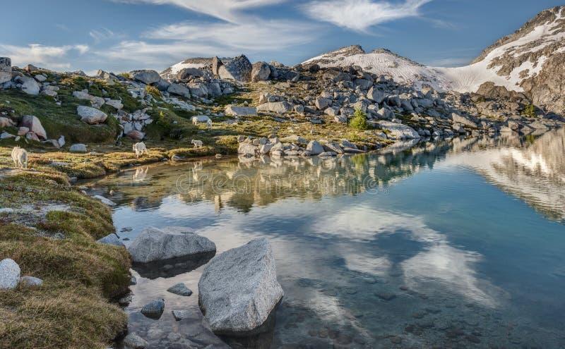 石山羊家庭由高山湖漫步 免版税库存图片
