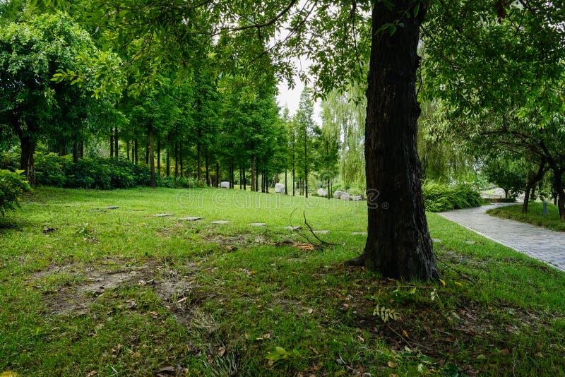 石板道路在夏天早晨森林的草坪在雨以后的 库存图片