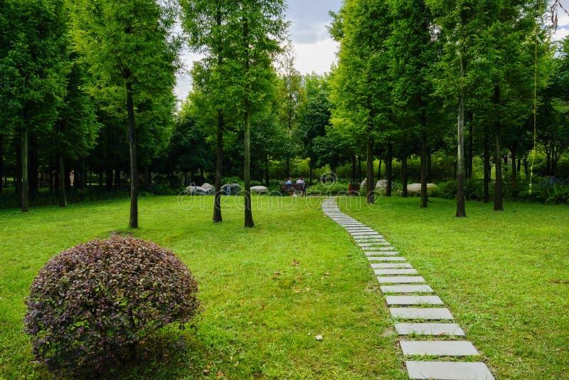 石板道路在森林的湿草坪在以后多云summ早晨 免版税图库摄影