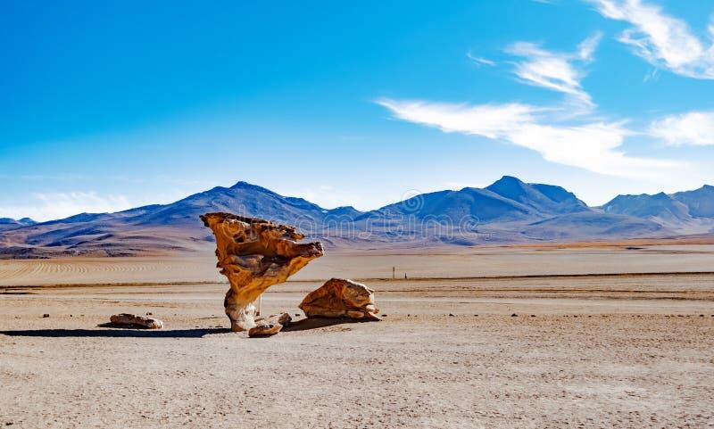 石树在玻利维亚的沙漠 免版税图库摄影