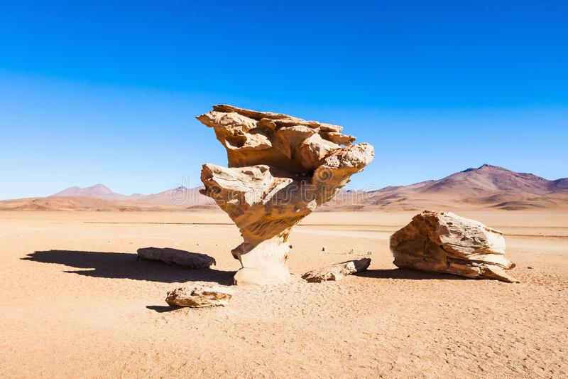 石树, Altiplano 免版税库存照片