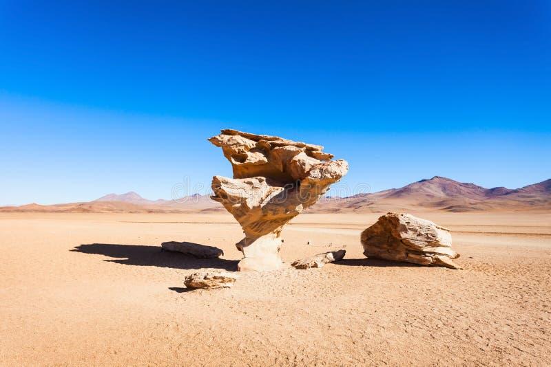 石树, Altiplano 库存图片