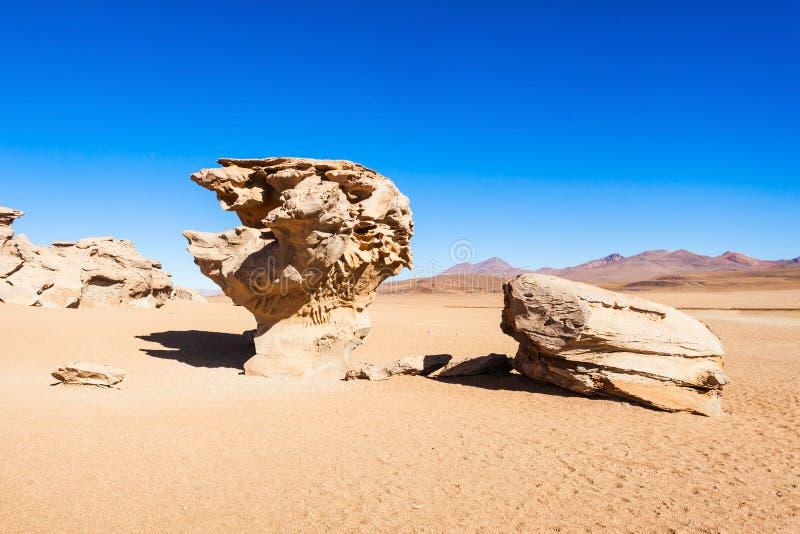 石树, Altiplano 免版税库存图片