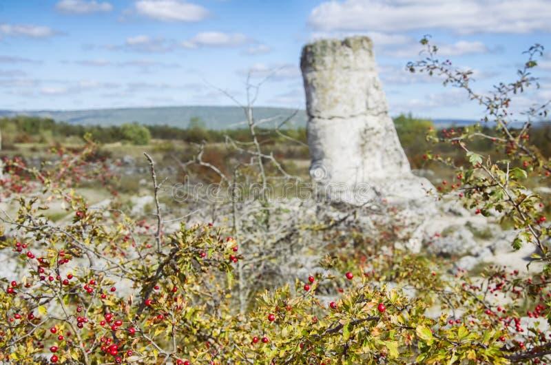 石森林,保加利亚 库存照片