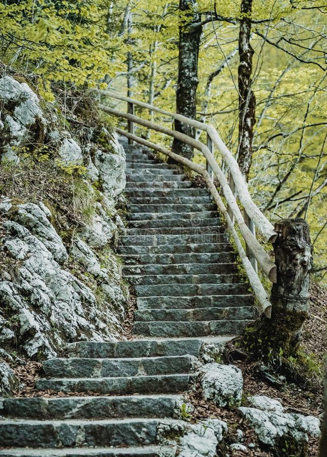 石楼梯在森林里 库存图片
