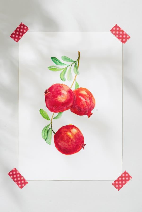 石榴 热带夏天概念由石榴果子和手图画例证制成 库存照片