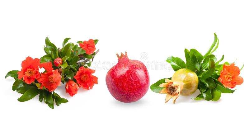 Download 石榴 库存图片. 图片 包括有 工厂, 素食主义者, 生气勃勃, 成熟, 草本, 原始, 热带, 自然, 食物 - 30336675