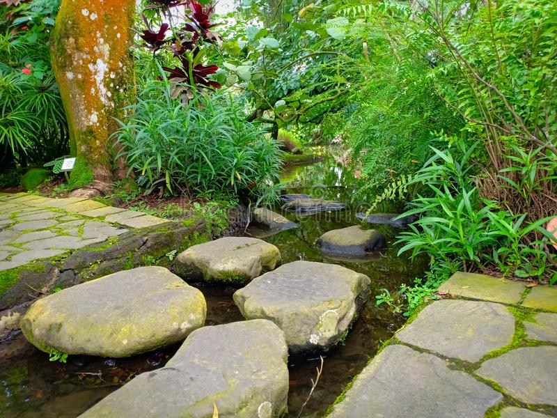 石步行在庭院里 库存图片