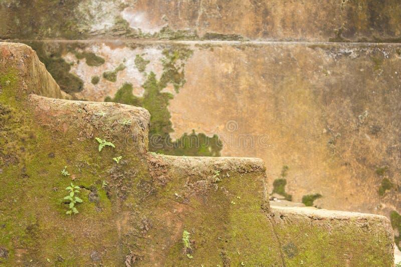 石步长满与绿色青苔和植物墙壁的被弄脏的背景的 免版税图库摄影