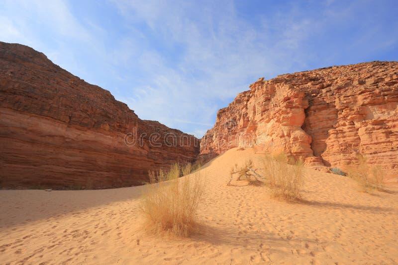 石沙漠 免版税图库摄影