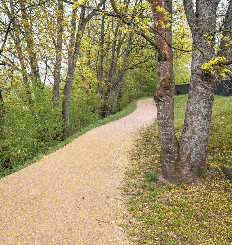石渣走道通过树在春天 图库摄影