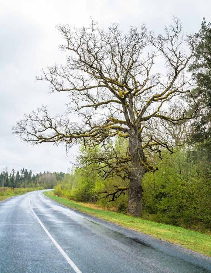 石渣走道通过树在春天 免版税库存照片