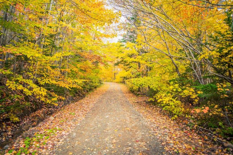 石渣路在秋天 库存图片