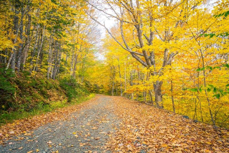 石渣路在秋天 图库摄影