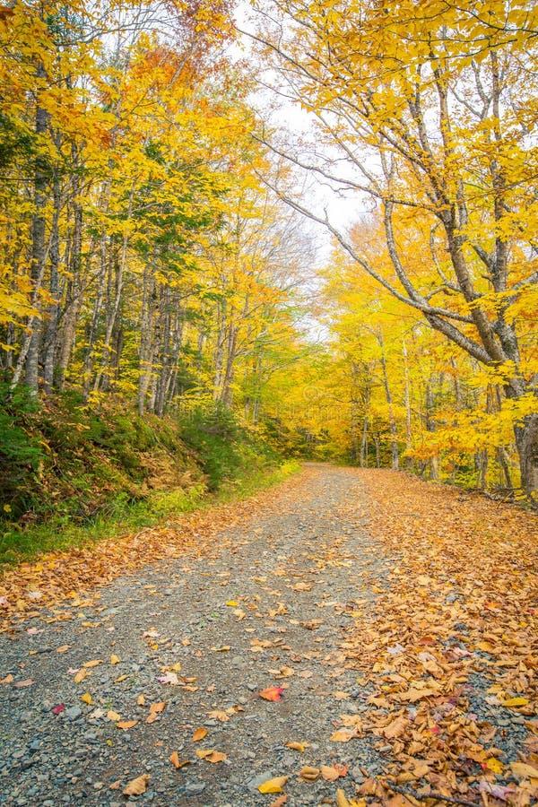石渣路在秋天 免版税库存图片