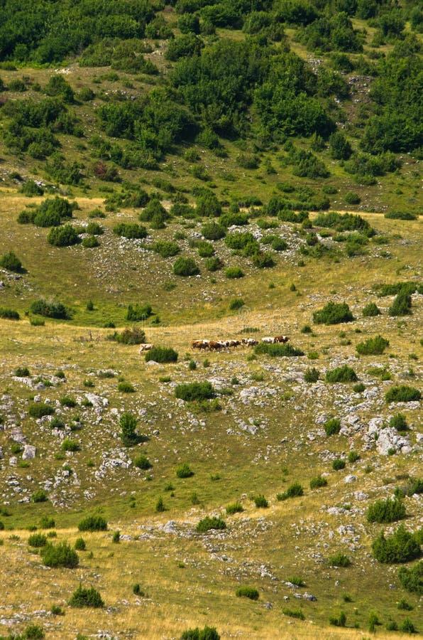 石灰岩地区常见的地形污水池,细节从烦恼高原风景 免版税库存照片