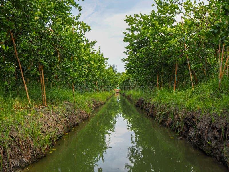 石灰庭院在禁令Phaeo区龙仔厝府,泰国 库存照片