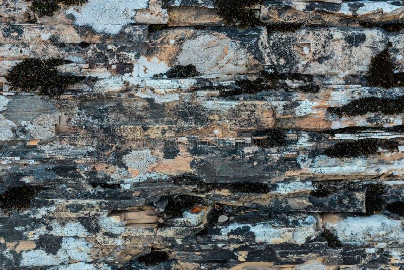 石灰石和dolostone纹理 免版税库存图片