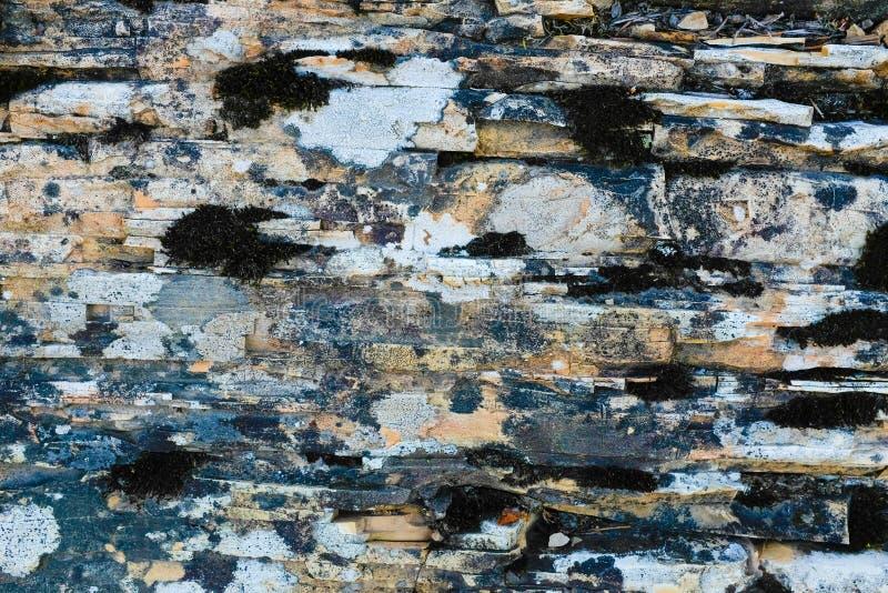 石灰石和dolostone纹理 免版税库存照片