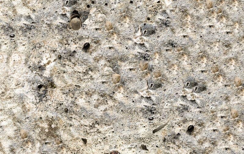 石灰色风化了背景灰色壳基本的地质干海底 库存照片
