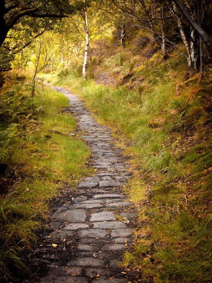 石路在有周围的草和树的秋天森林地 免版税库存照片