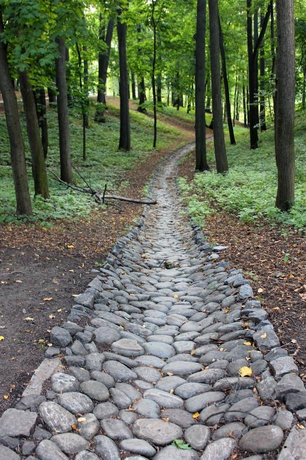 石道路在一个密集的绿色森林里 免版税图库摄影