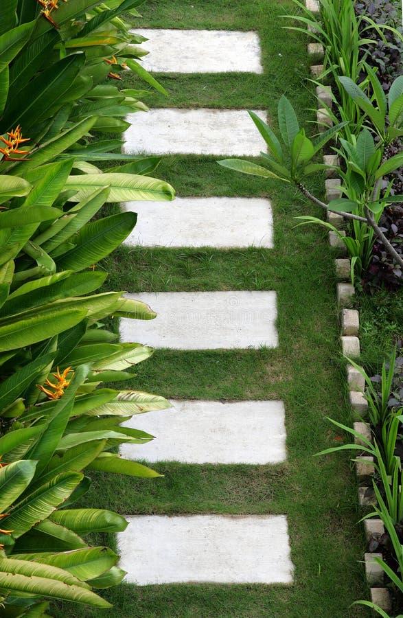 石道路在一个热带公园 免版税库存图片