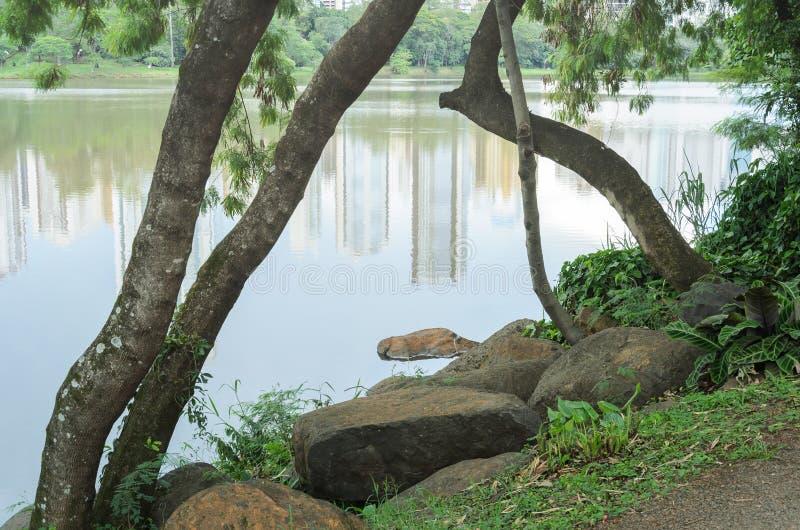 石头和树枝在湖岸  图库摄影