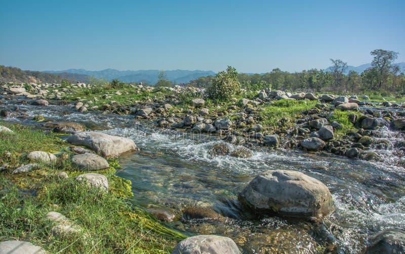 石头在河 免版税库存图片