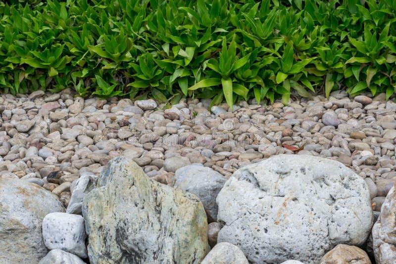 石头晃动石渣和植物 库存图片