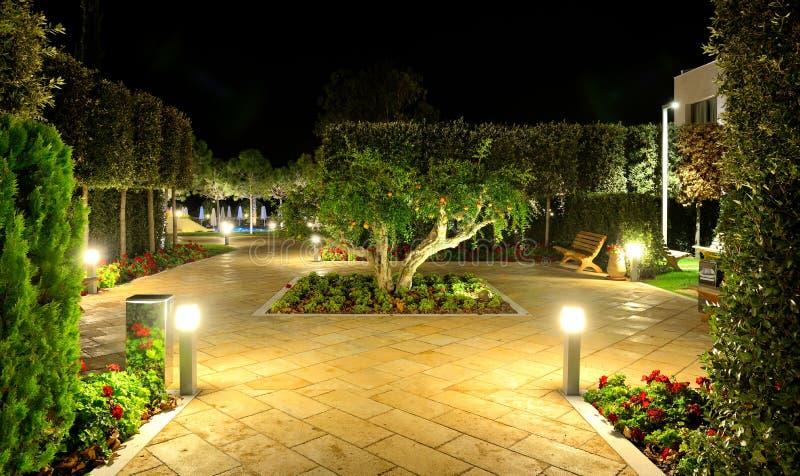 石榴树用在夜照明的果子 库存照片