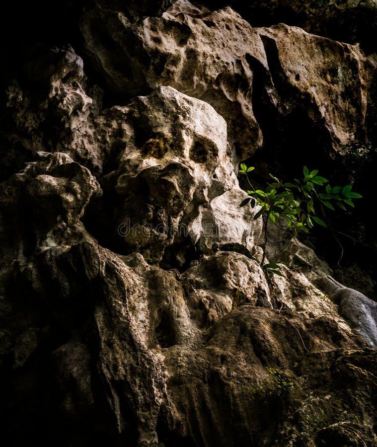 石头看起来象一块人的头骨 免版税库存图片