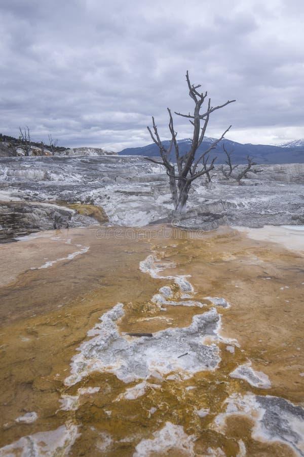 矿床导致对一棵贫瘠树 免版税库存照片