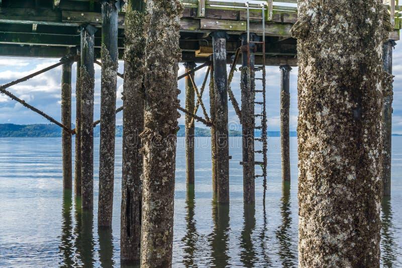 码头打桩处于低潮中4 免版税库存图片