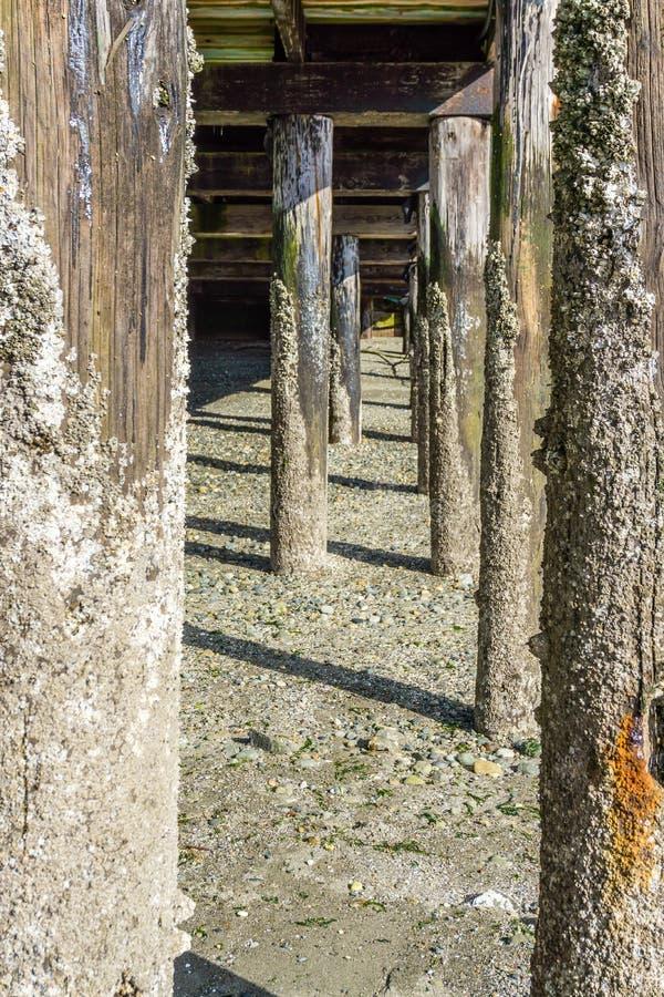 码头打桩处于低潮中 免版税库存图片