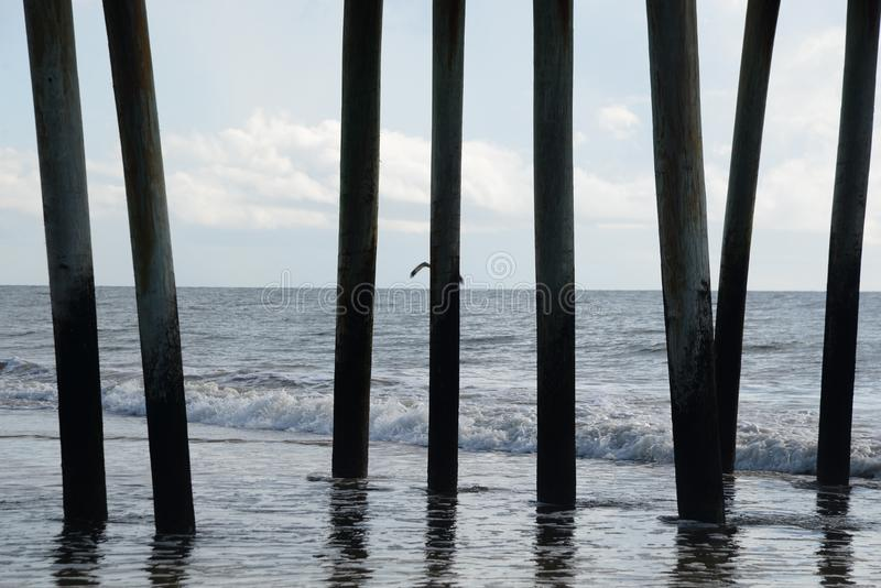 码头打桩邀请各种各样的空气和行驶远洋的动物 库存照片