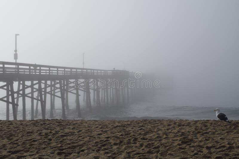 码头消失入与海鸥的雾 图库摄影