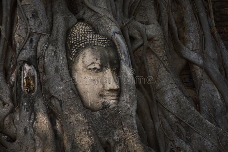 砂岩菩萨头在树根的在Wat Mahathat, Ayut 图库摄影