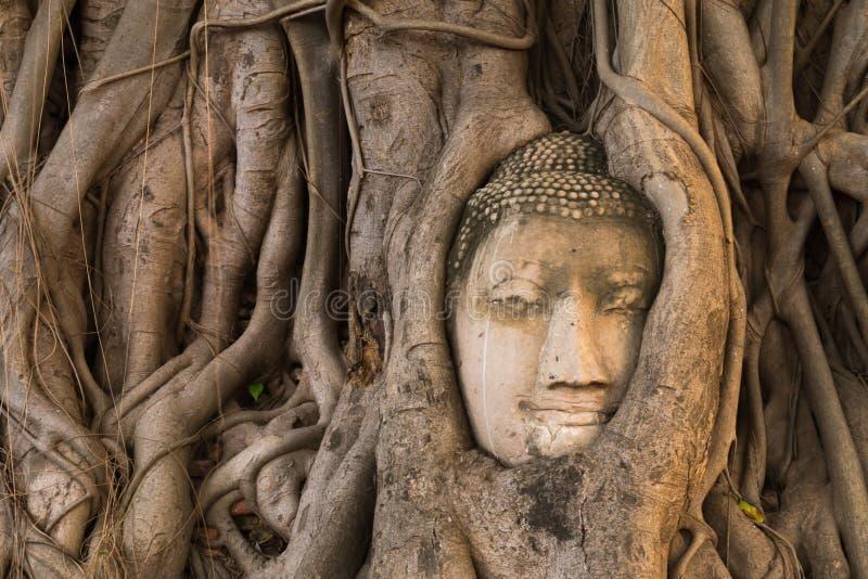 砂岩菩萨树根头报道在Wat Mahathat, Ayu 免版税库存照片