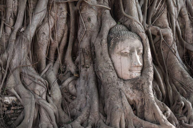 砂岩菩萨头在树根的在Wat Mahathat, Ayut 免版税库存照片