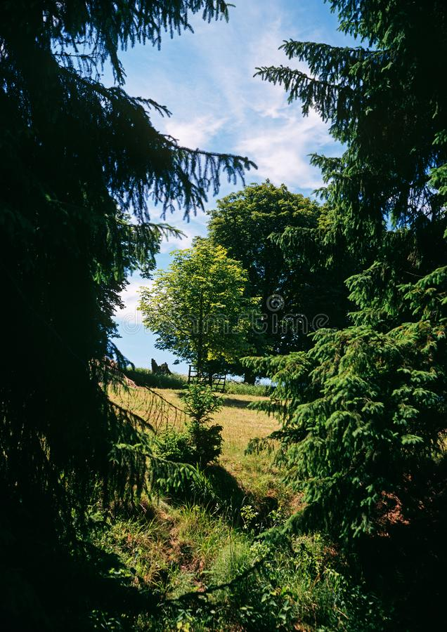 砍伐夏天森林 免版税库存图片