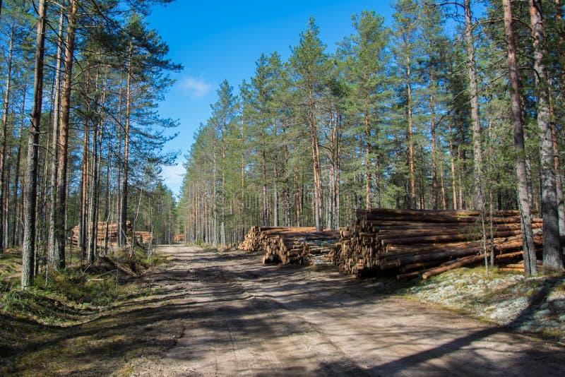 砍伐森林在列宁格勒地区 图库摄影