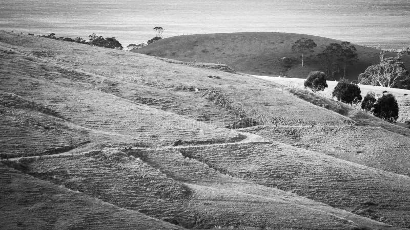 砍伐森林在澳大利亚 库存图片