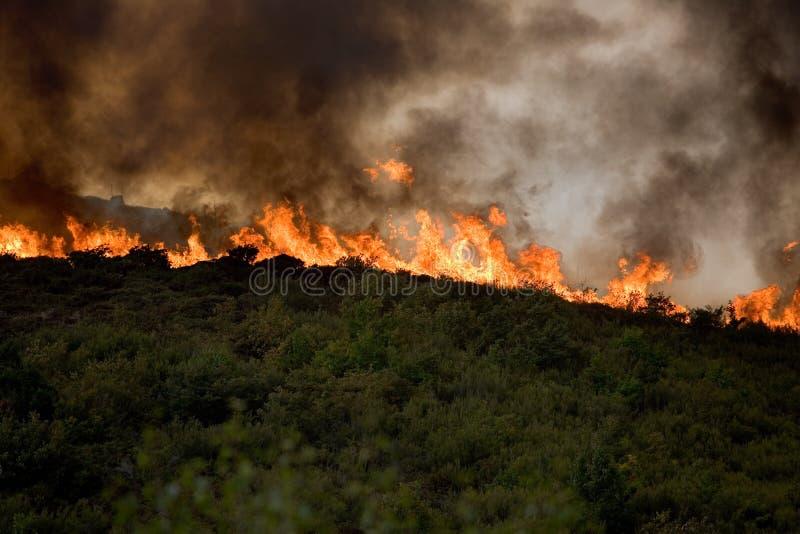 砍伐森林火 库存图片